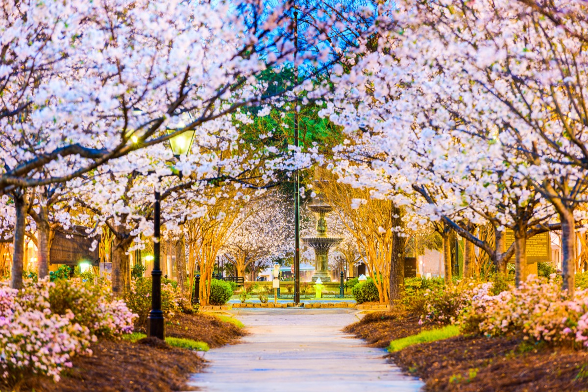 Macon, Georgia, USA in the spring with Japanese cherry trees