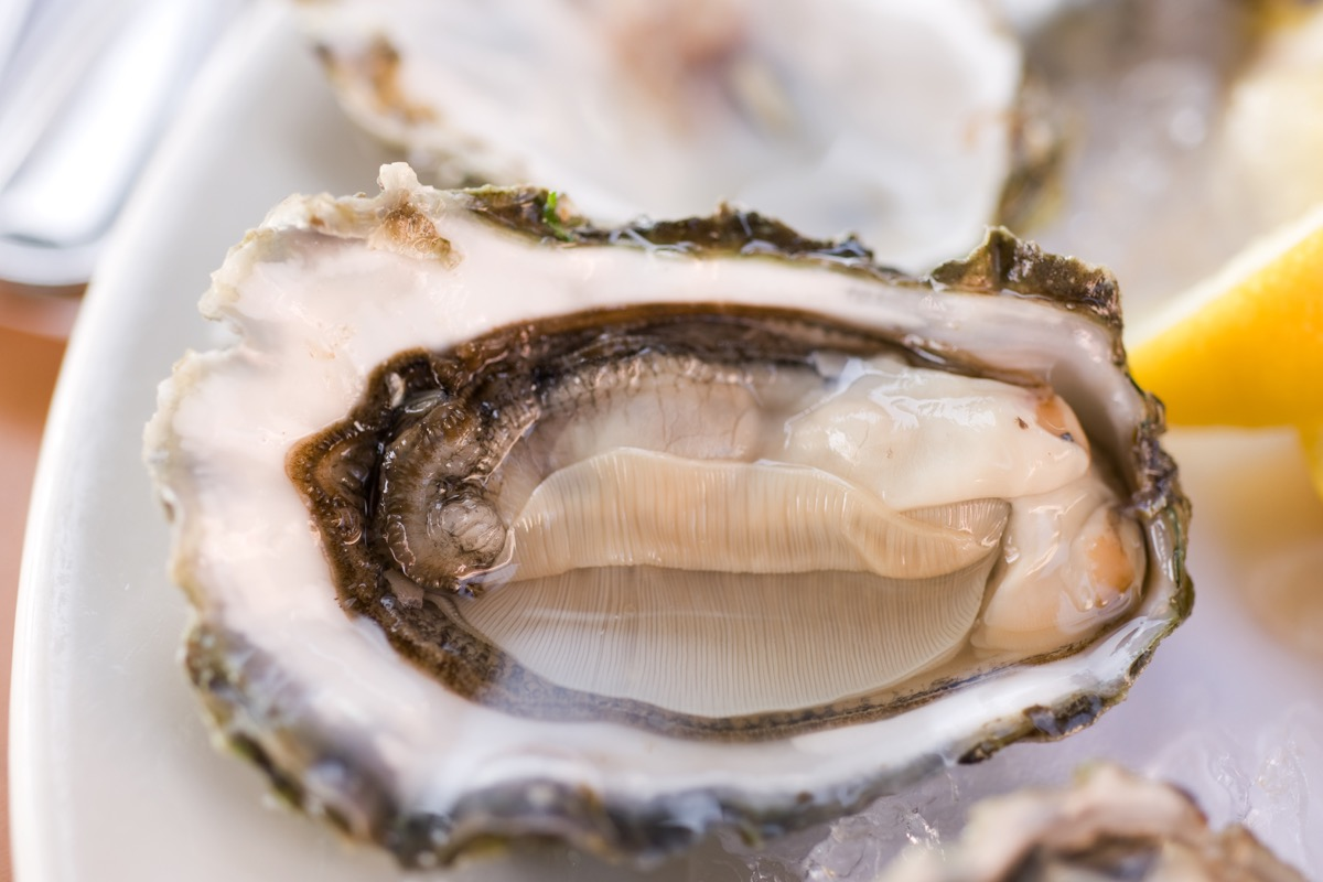 olympia oyster in a dish