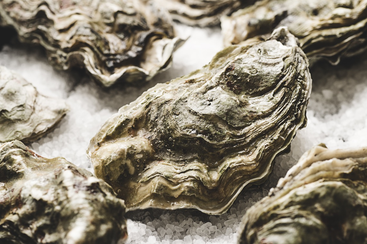 Close-up of raw fresh oysters on the salt background