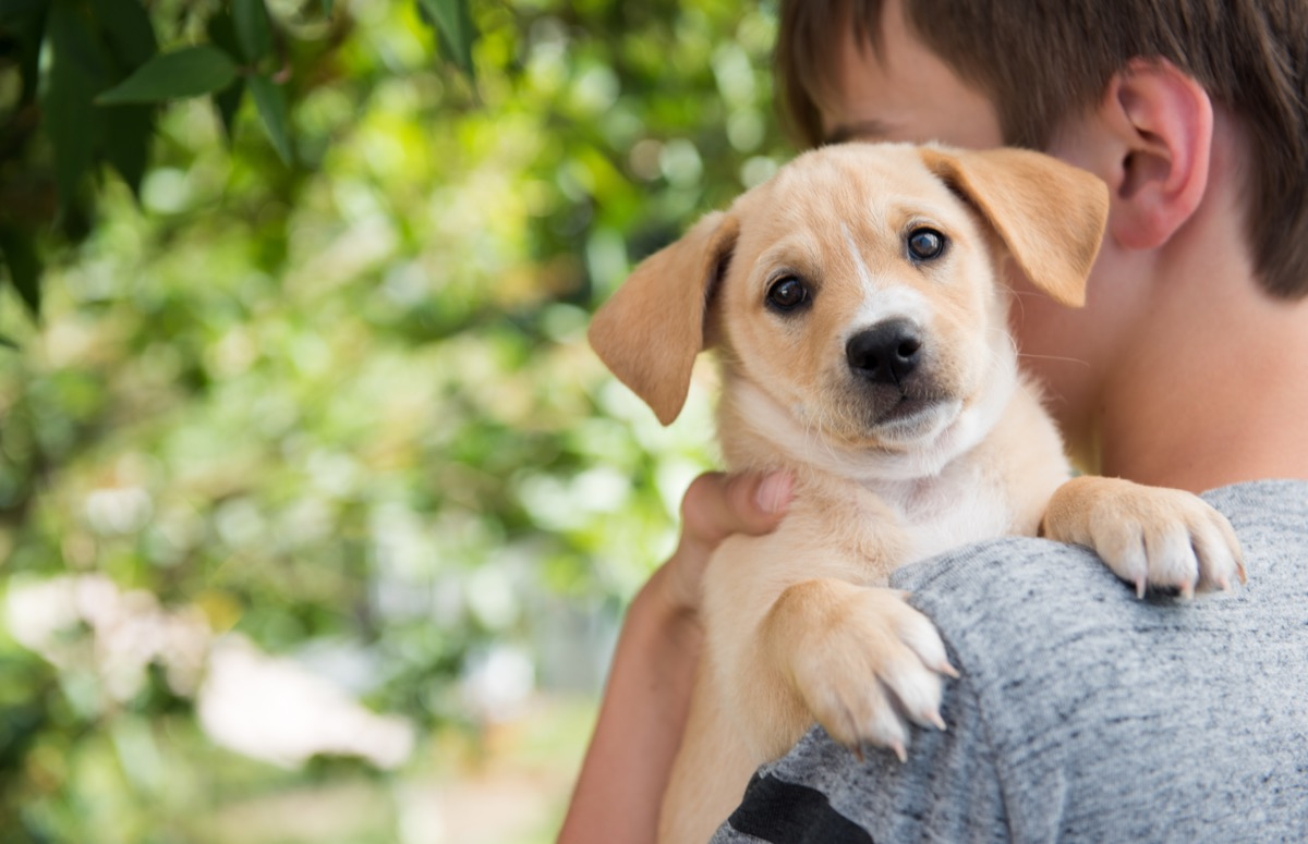 Boy holding a puppy