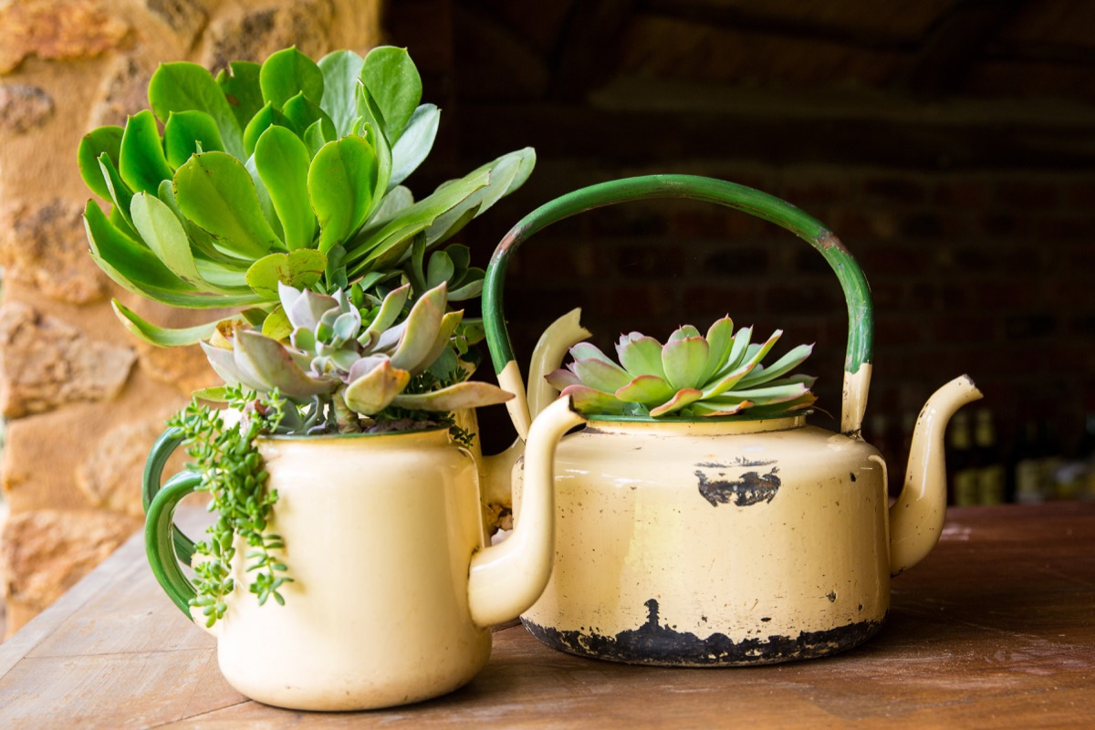 Up-cycled teapots as planters