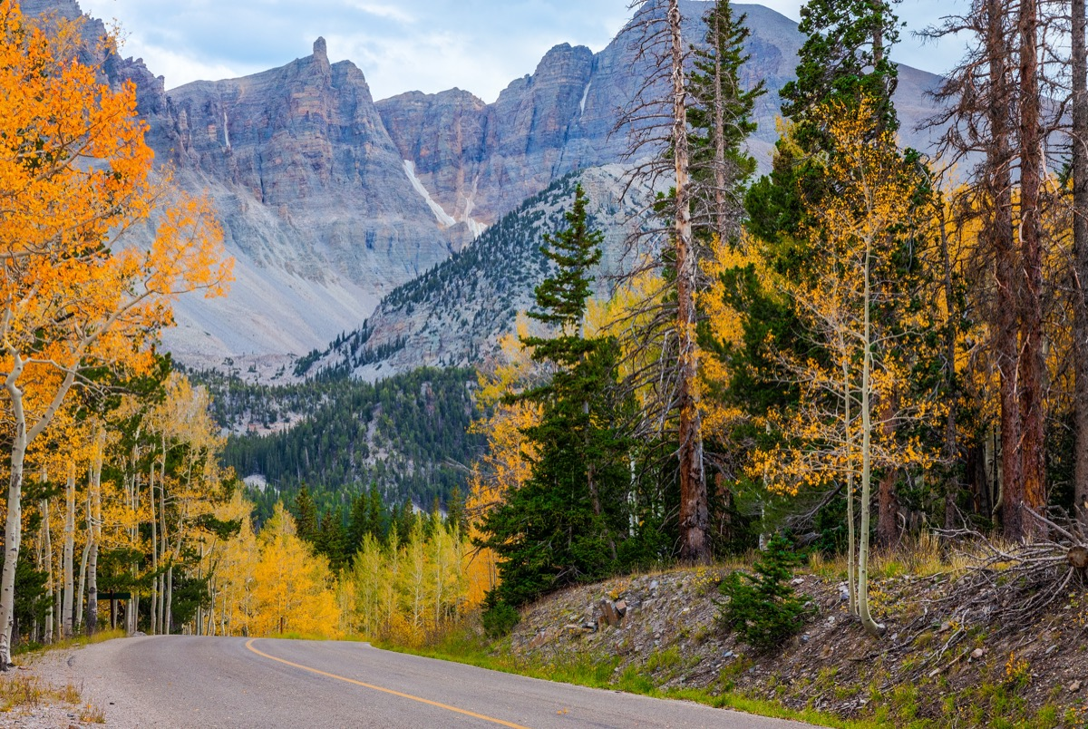 road through foliage with a mountain in the background