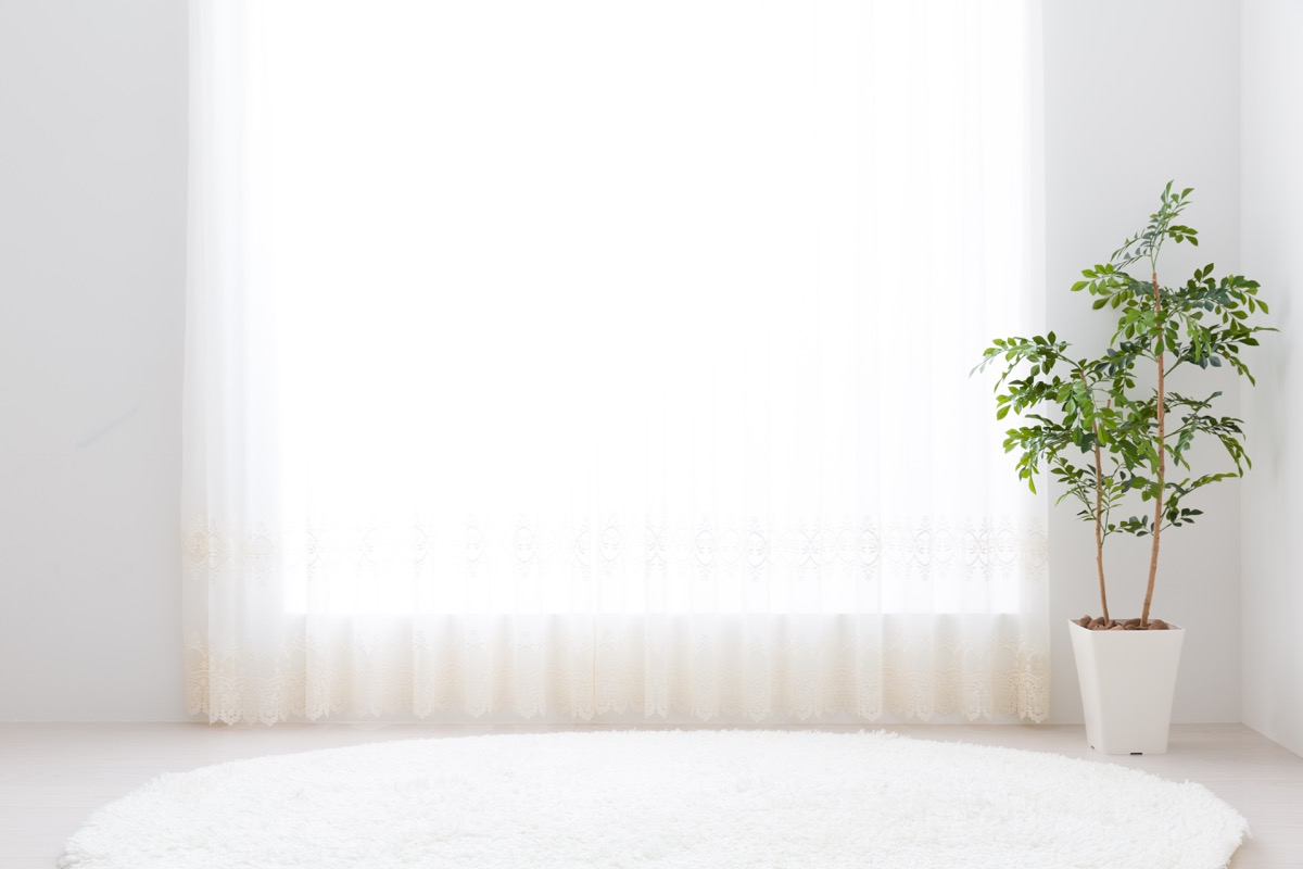 white living room with white rug and plant
