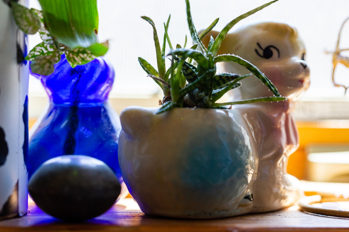 countertop cluttered with plants and knick knacks