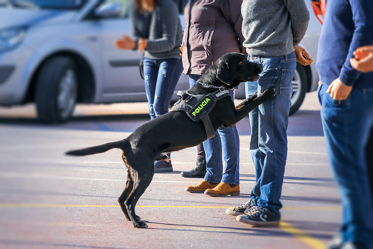 police dog smelling people