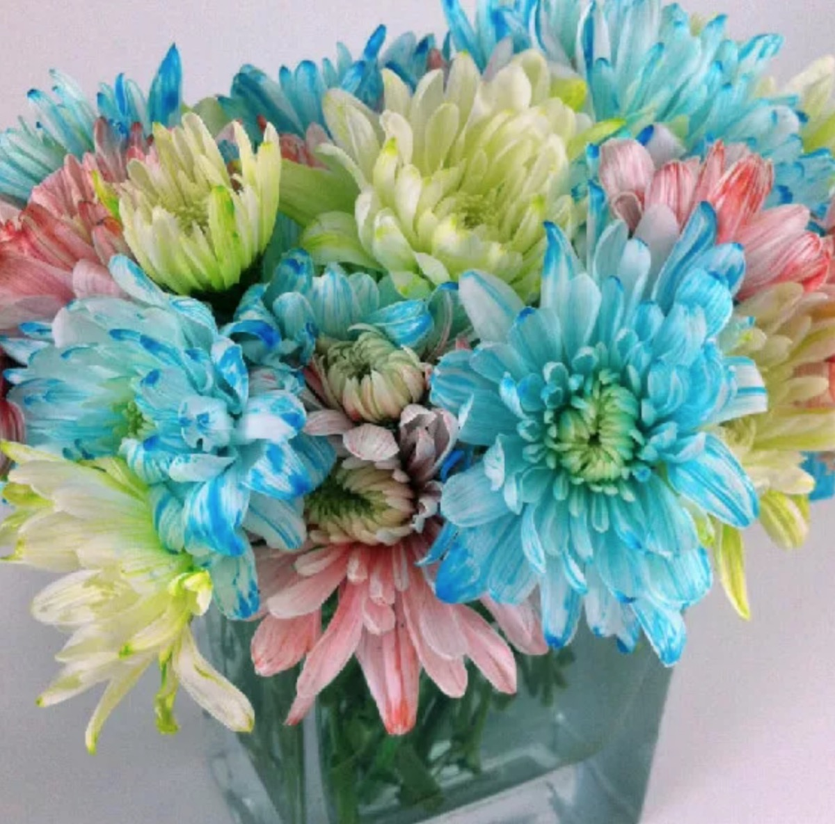 brightly dyed flowers