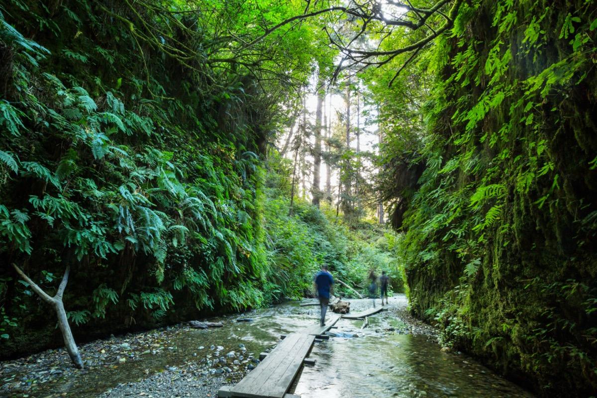 three people hike through fern canyon