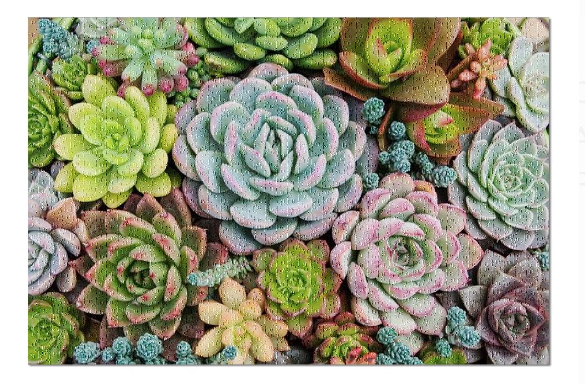 jigsaw puzzle of succulents