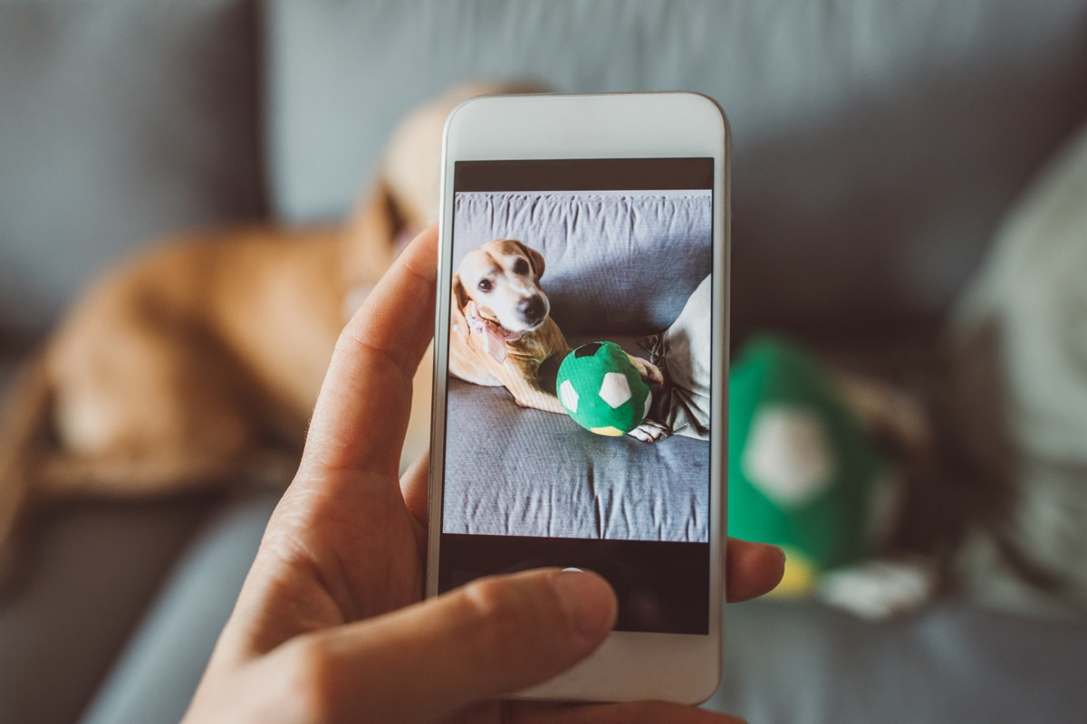 Pet sitter caring about dogs. She is playing with them at home based environment. She is keeping in contact daily with updates on walks and activities and photos. Taking photo of pets to update owner about pets