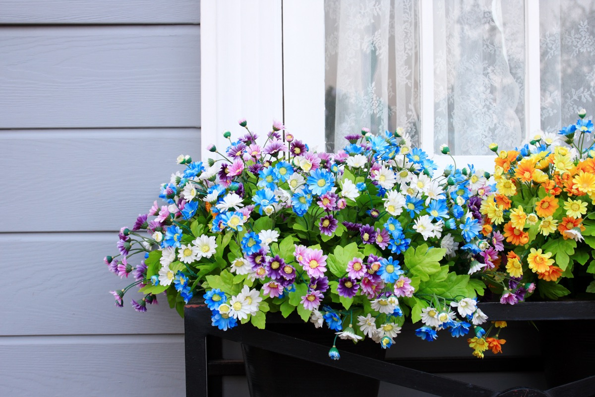 Window and flower box outside a home