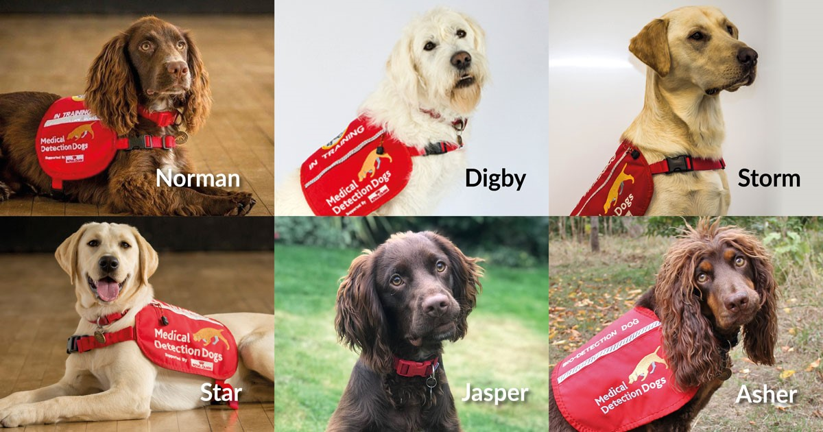 six medical detection dogs
