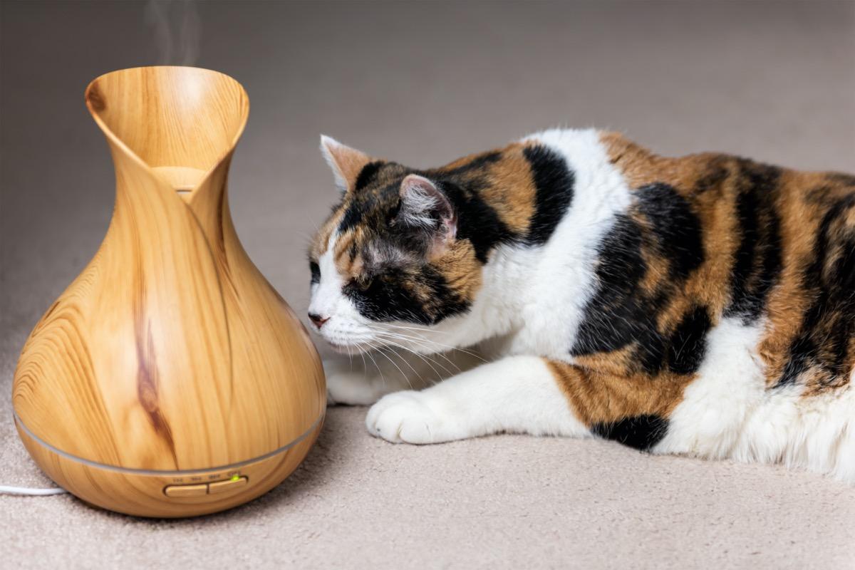 calico cat sniffing essential oil diffuser