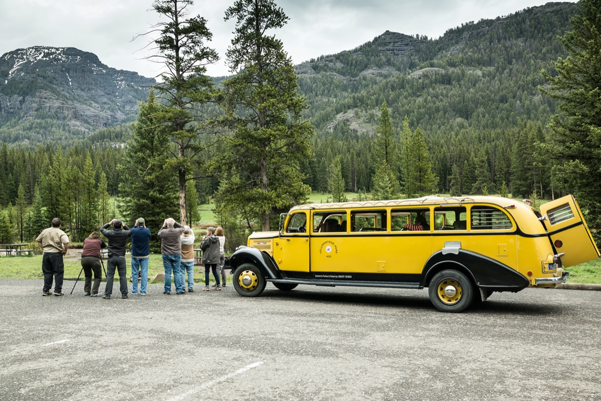a tour group explores yellowstone in a yellow bus