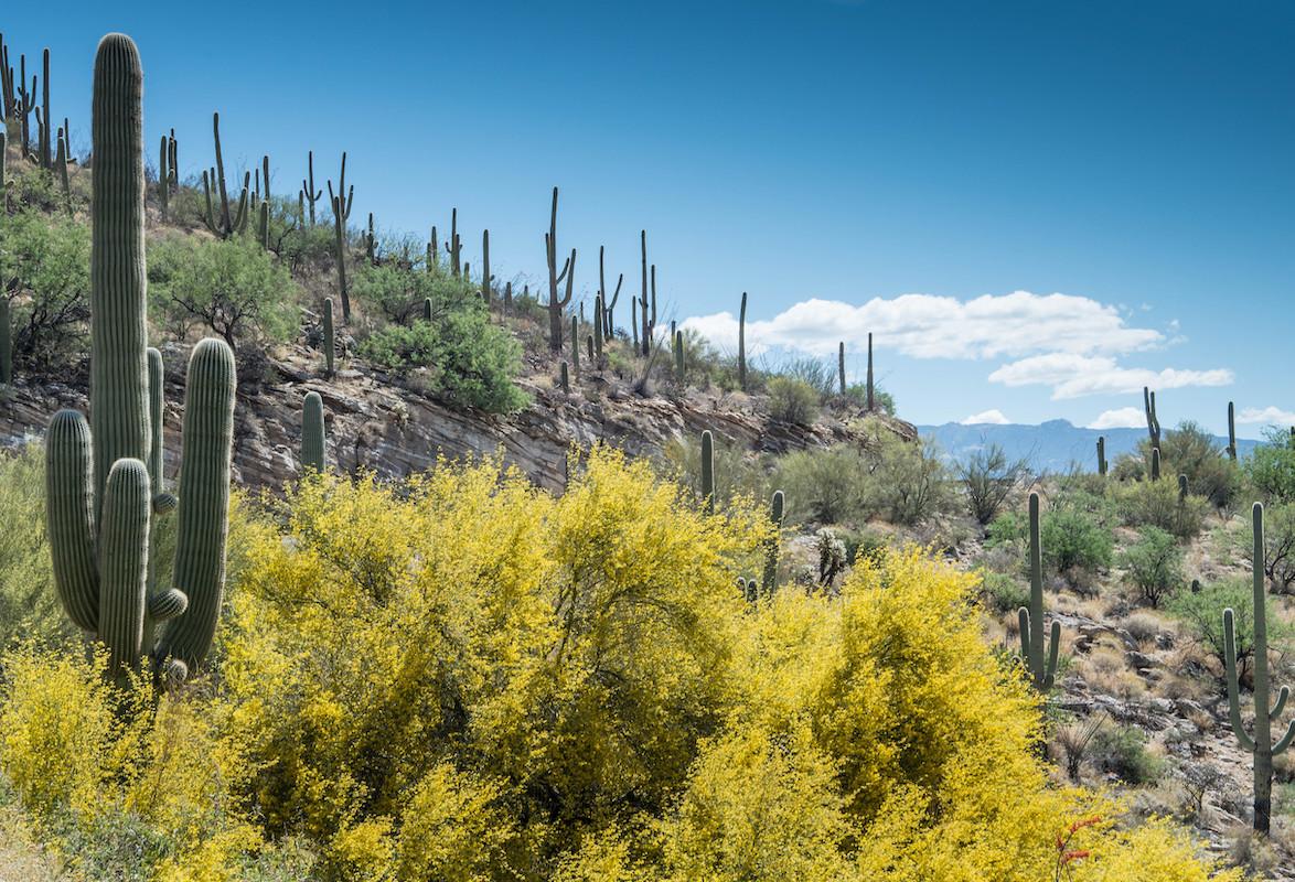 cacti in santa cruz county, arizona