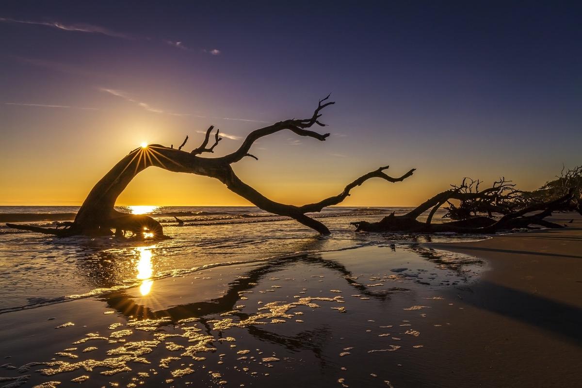 sunrise over driftwood beach in georgia