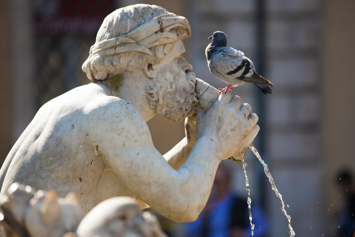 Pigeon on Fontana del Moro statue