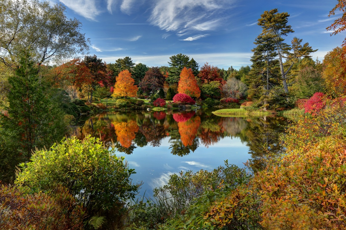 asticou azalea garden in the fall with a reflection on the pond