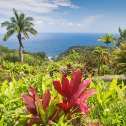 flowers and palm trees overlooking the water in maui