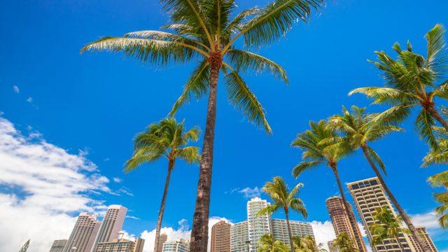 honolulu, hawaii skyline with buildings and palm trees