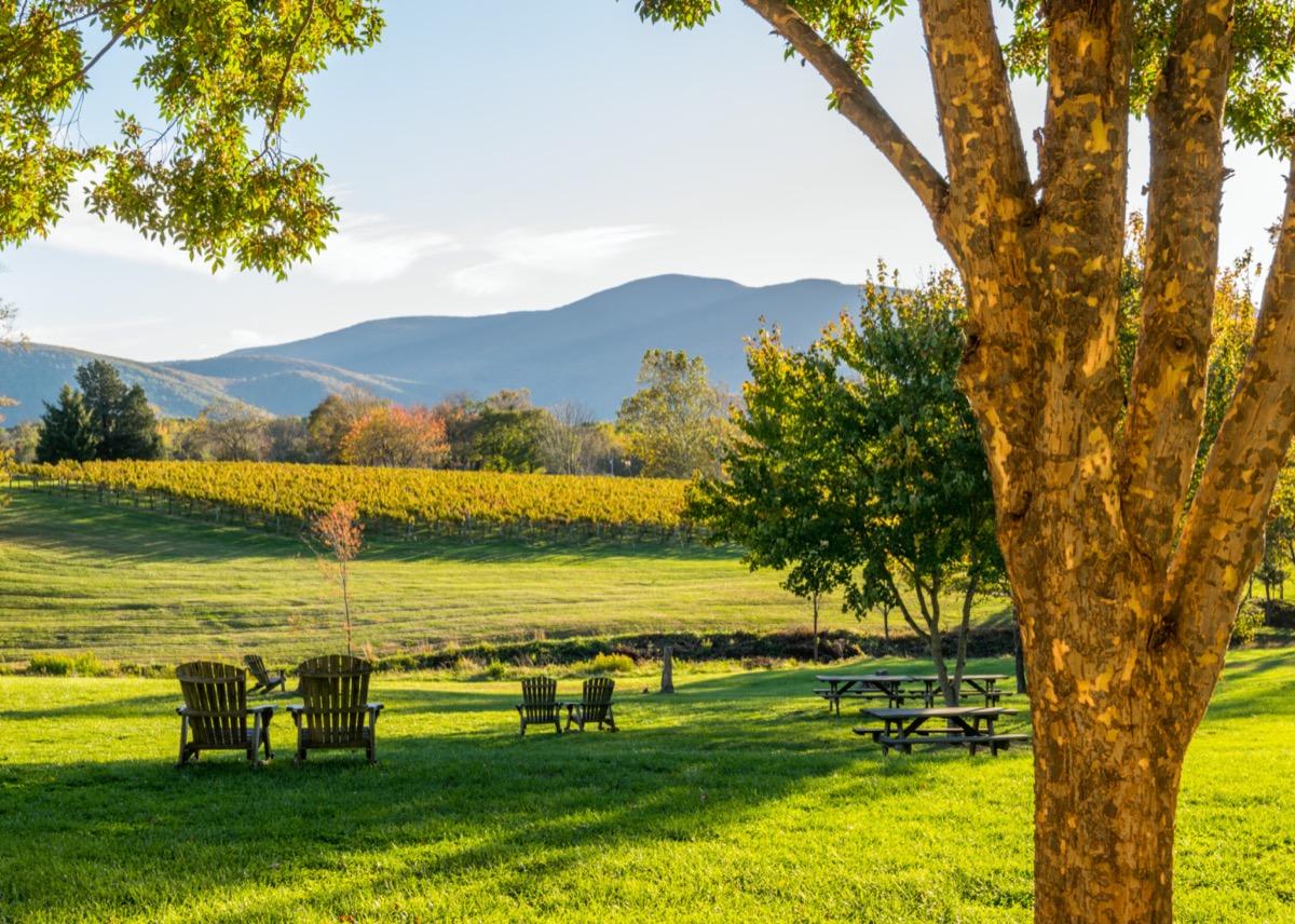 vineyards in shenandoah valley