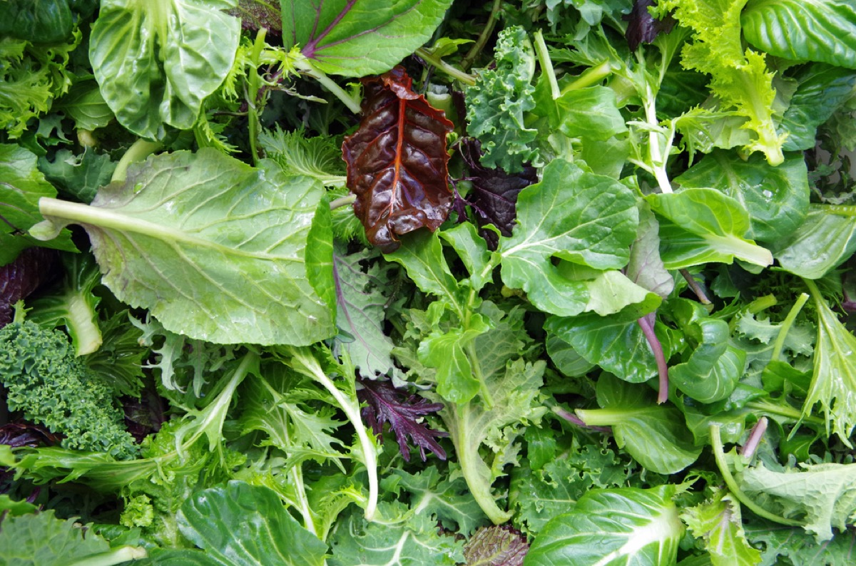 close up of mixed lettuce greens