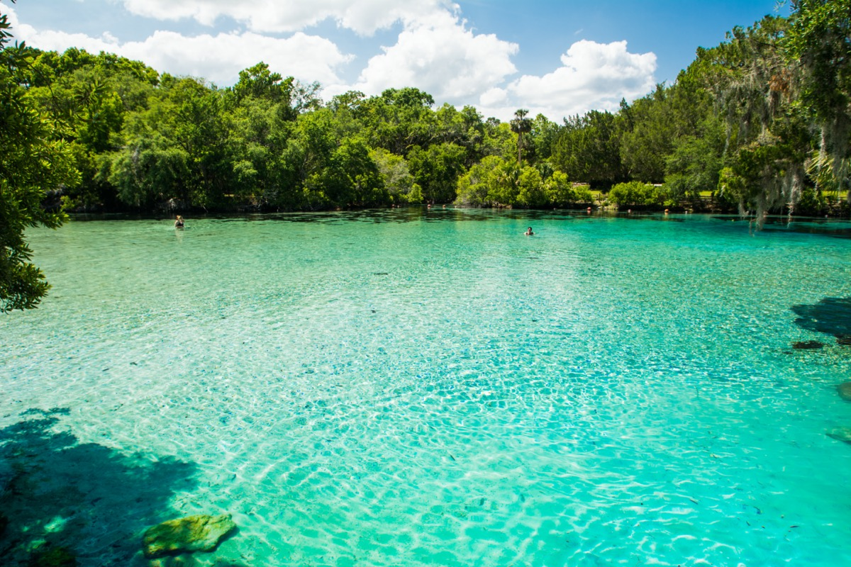 crystal clear water of silver glen springs in florida