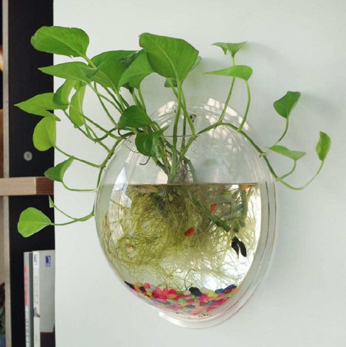clear round wall terrarium