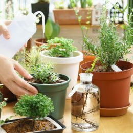 white woman watering indoor potted plants
