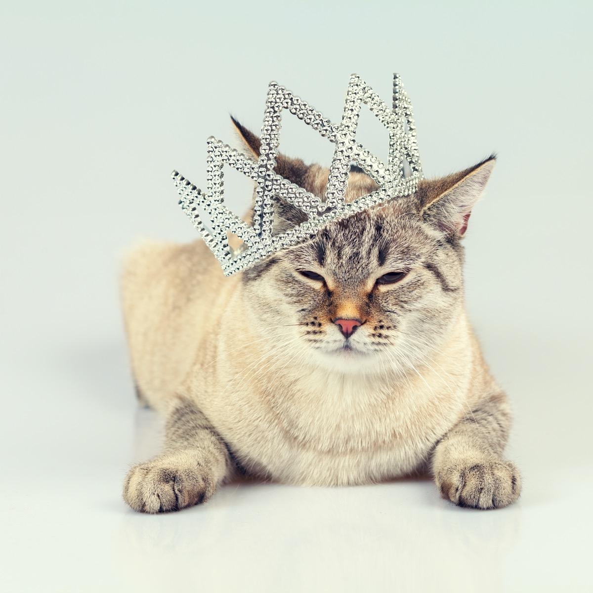 Cat in tiara