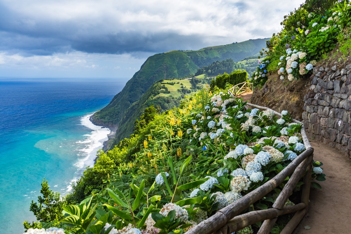 Costal path with Hydrangeas, Sao Miguel, Azores, Portugal
