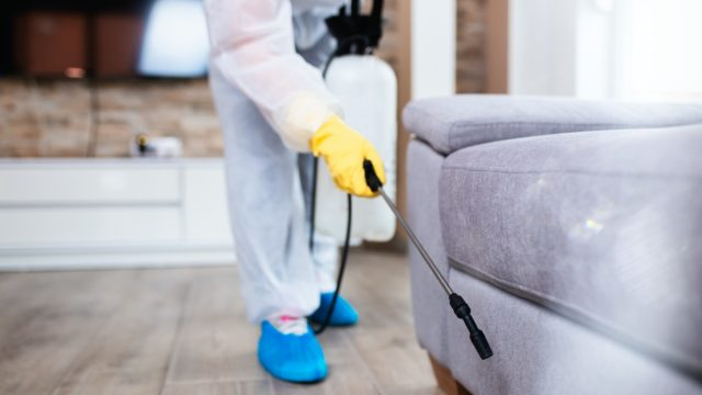 exterminator spraying gray sofa