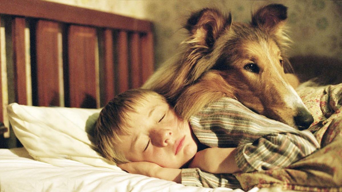 still from lassie