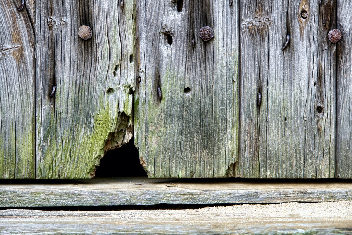 hole in wood siding