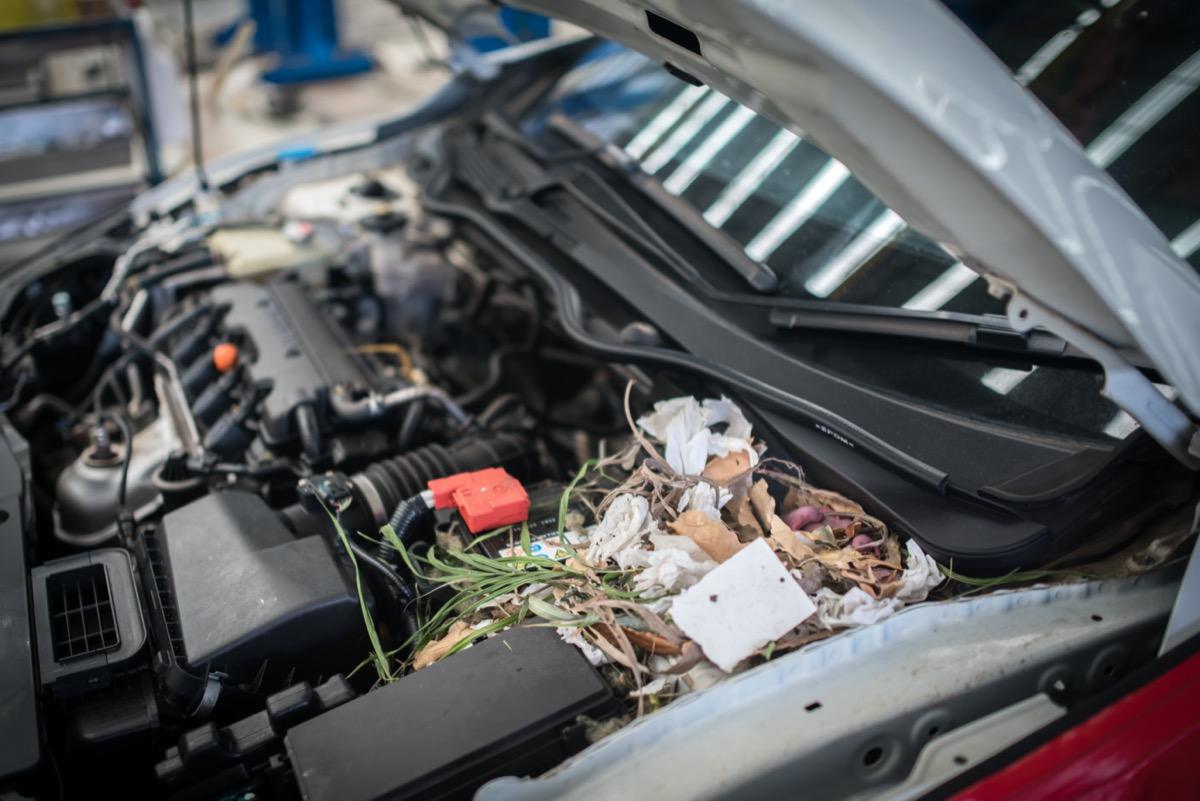 mouse nest inside car engine