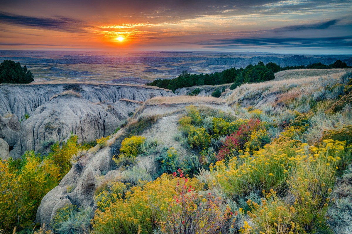 yellow flowers and rocks at Badlands National Park in South Dakota at sunrise