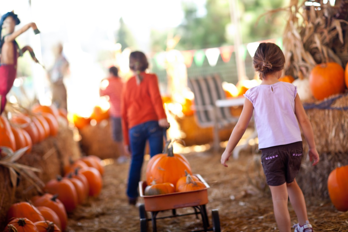 Cute Little Girls Pulling Their Pumpkins In A Wagon At A Pumpkin Patch One Fall Day.