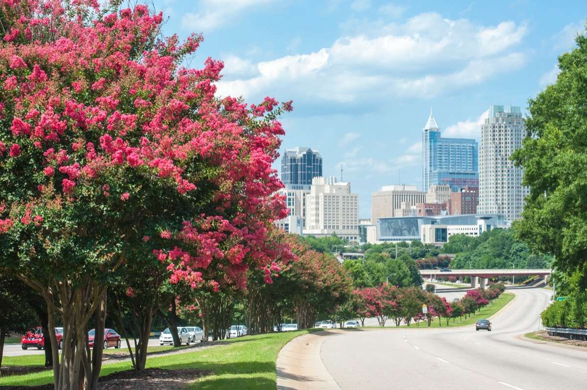 cityscape photo of Raleigh, North Carolina in the afternoon