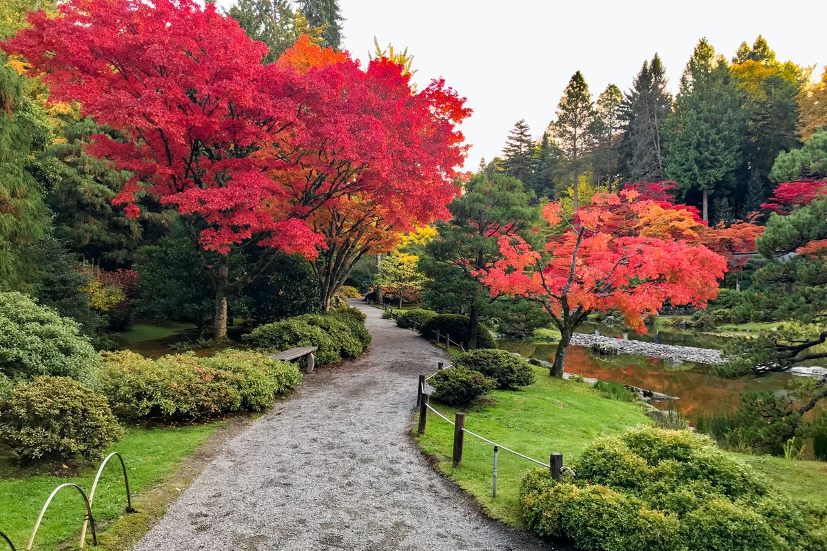 red and green trees and a walk path in a garden in Seattle, Washington