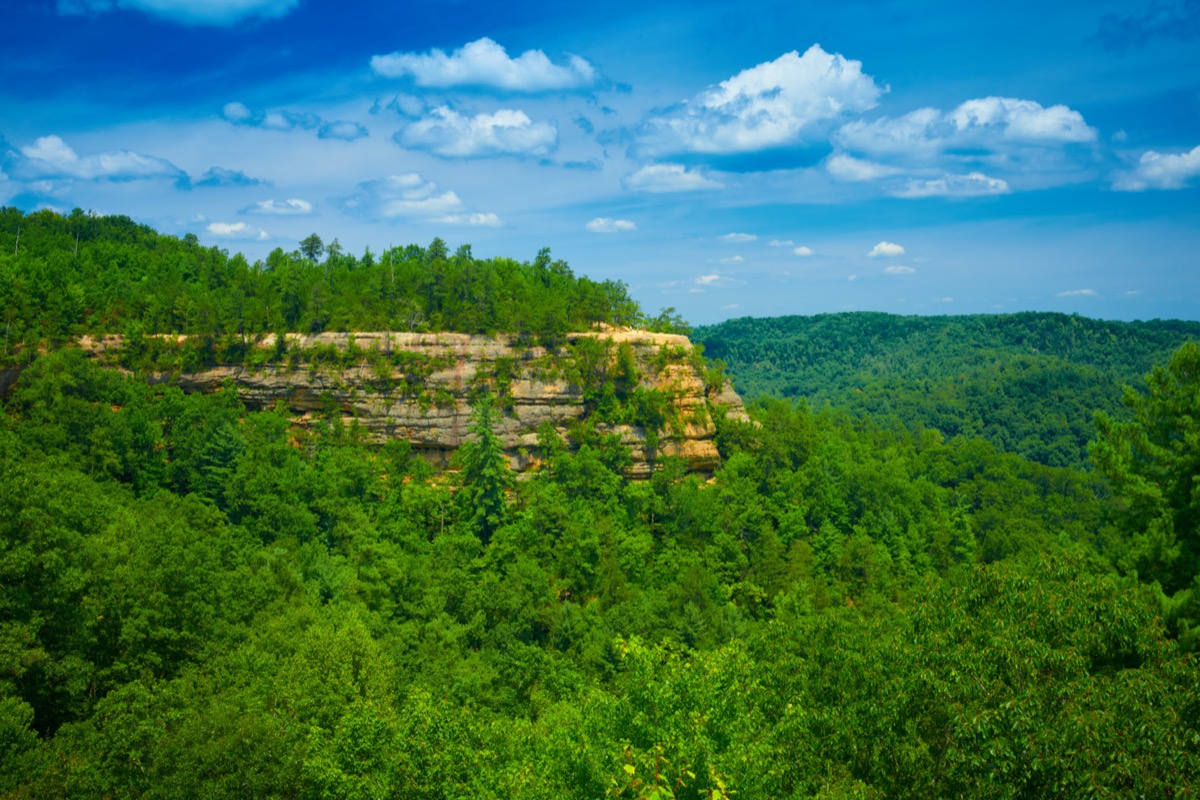 The Battleship Rock surrounded by trees at the Red River George Geological Area in Wolfe County, Kentucky