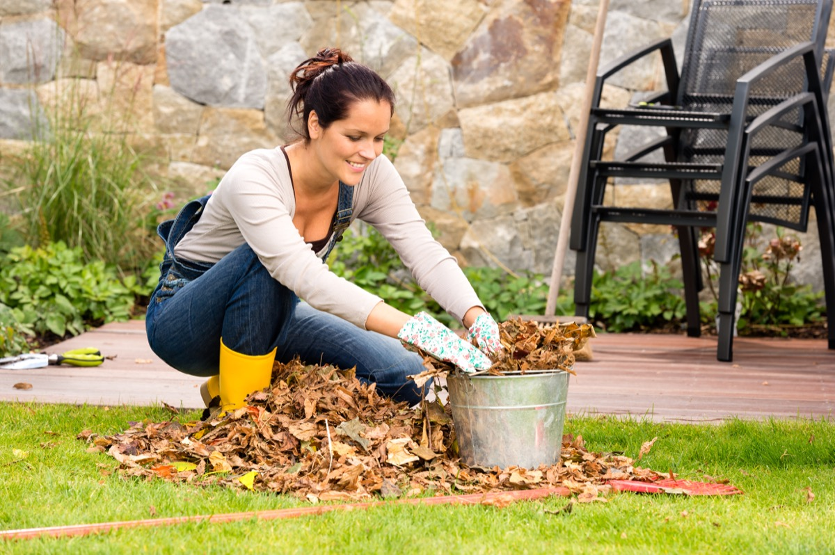 Woman collecting leaves doing yard work outside