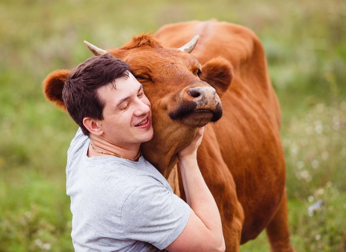 Man giving cow a hug