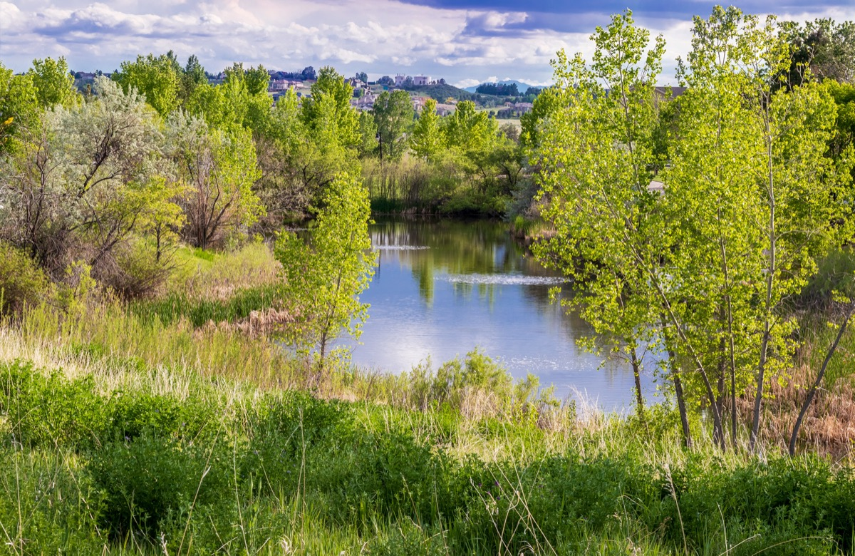 trees reflecting in a pond in Aurora, Colorado
