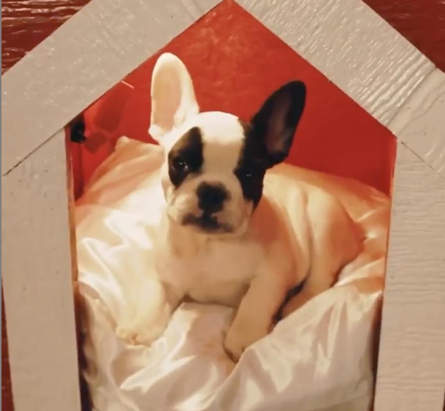 Banditi, Jada Pinkett Smith's dog