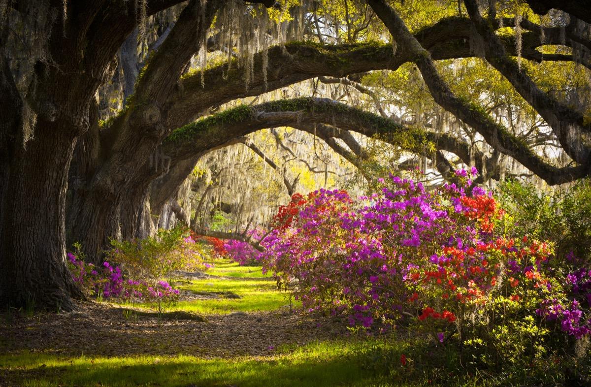 landscape photo of a garden in Charleston, South Carolina
