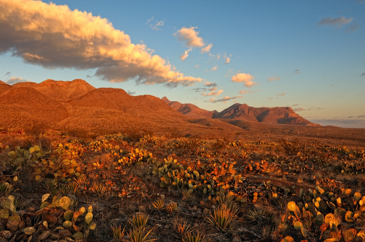 Southern Rocky Mountains and flowers in El Paso, Texas at sunrise