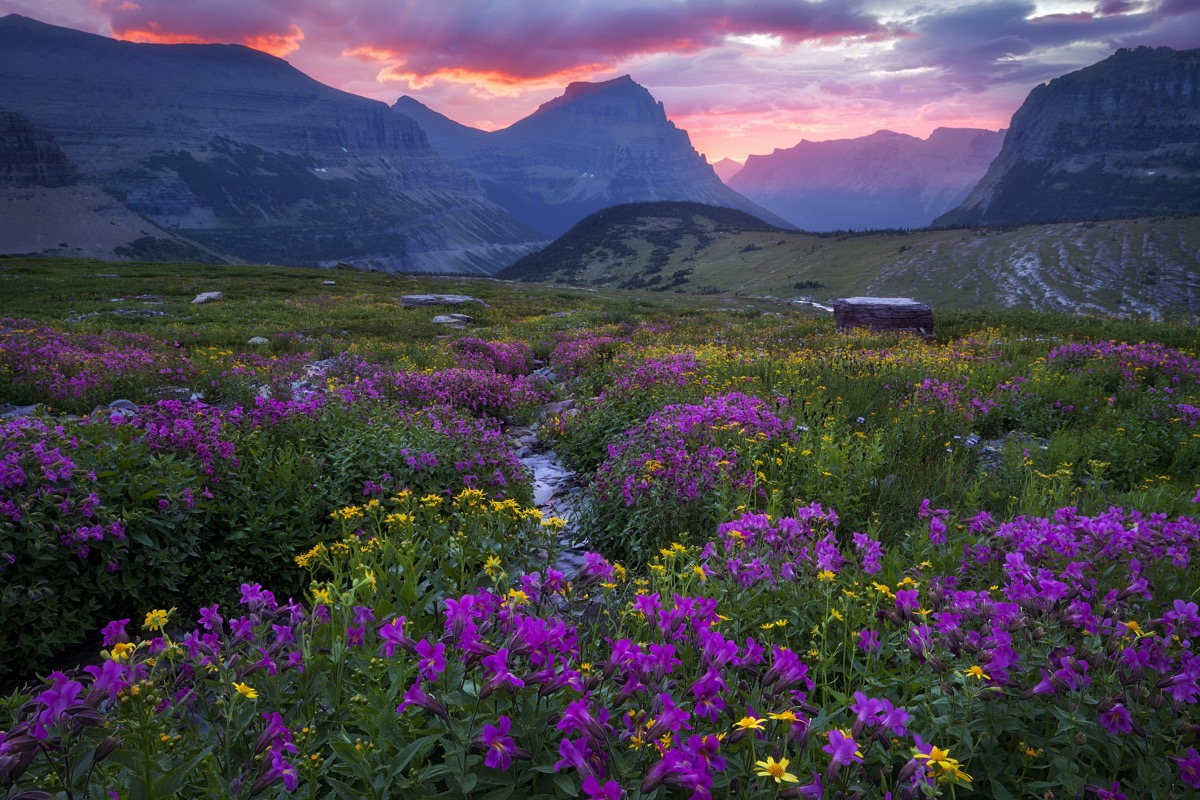 glaciers and a meadow in Glacier National Park, Montana at dusk