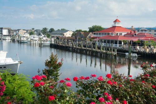 canal next to a dock, restaurant, and roses in the foreground in Lewes, Delaware