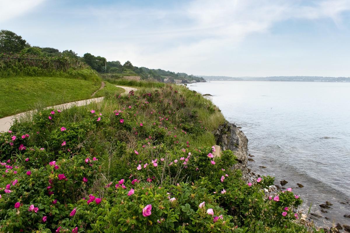 flowers and beach in Newport, Rhode Island