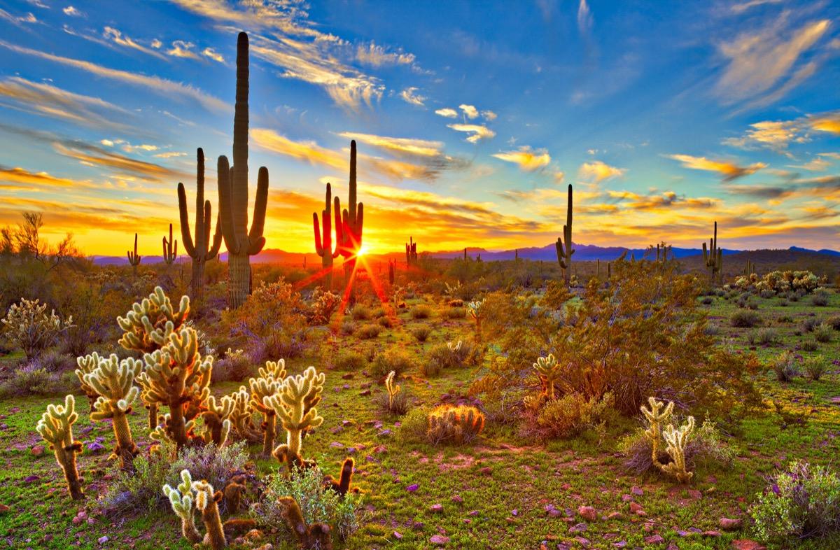 landscape photo of Phoenix, Arizona at sunset