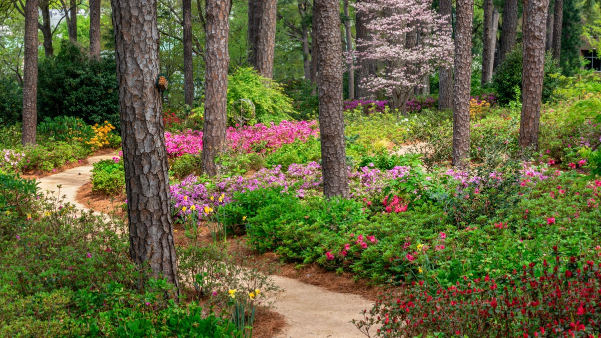 garden filled with flowers and trees in Raleigh, North Carolina